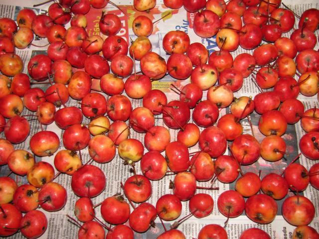 Райские яблоки во время беременности